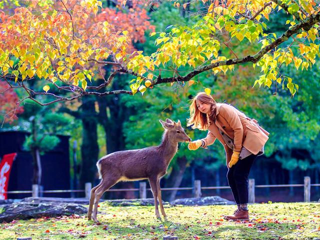 奈良|奈良公园