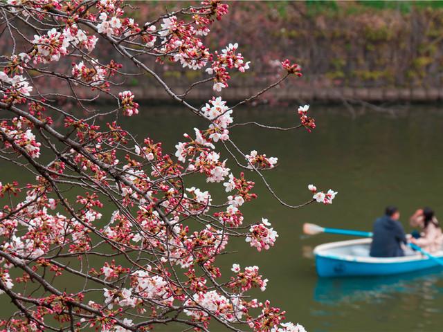 杭州—西溪湿地梅花