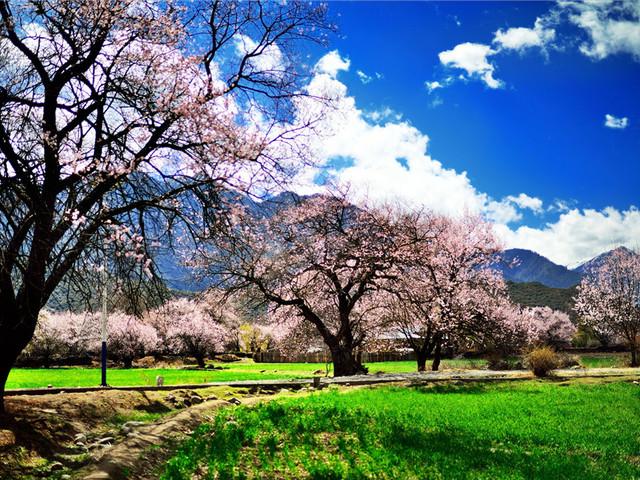 3月的林芝桃花